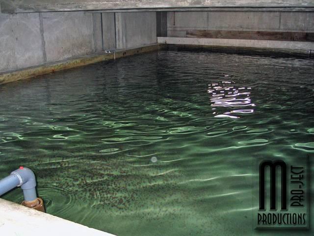 xavax wassermelder zum schutz vor 220berschwemmungen oder